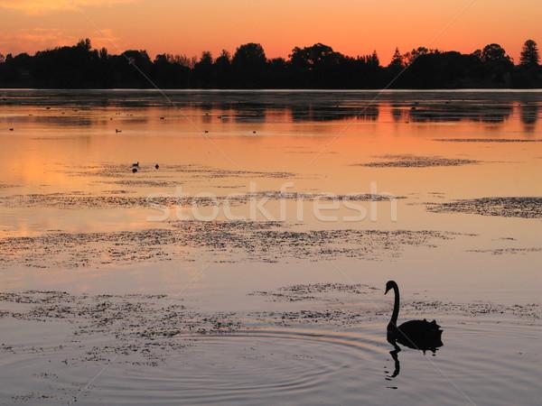 Swan Lake Stock photo © zambezi