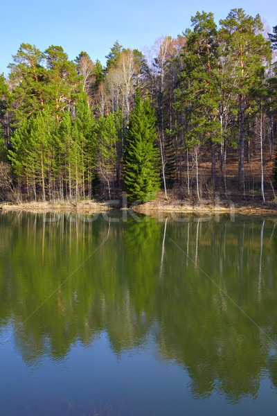 Pond Stock photo © zastavkin