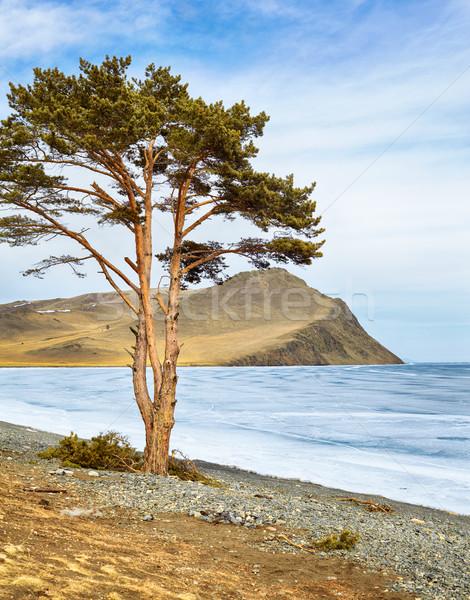 Magányos fa tó sziget Szibéria tél Stock fotó © zastavkin
