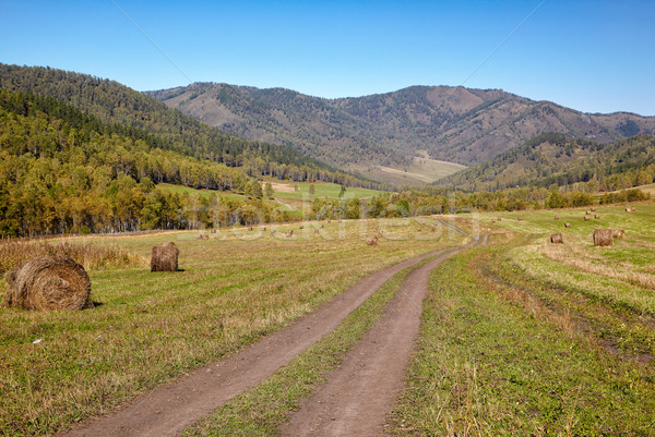Altai road Stock photo © zastavkin
