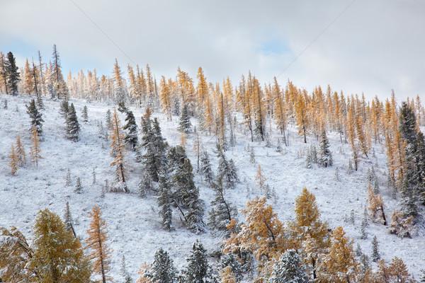 Altai under snow Stock photo © zastavkin
