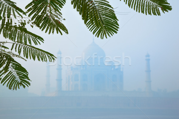 Photo stock: Taj · Mahal · matin · brouillard · caché · brouillard · ciel