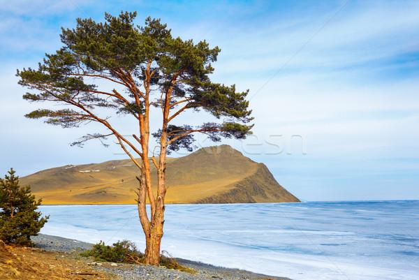 Eenzaam boom meer eiland siberië winter Stockfoto © zastavkin