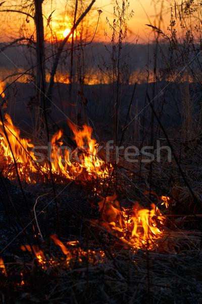 Incendios forestales fuego forestales árbol madera verano Foto stock © zastavkin