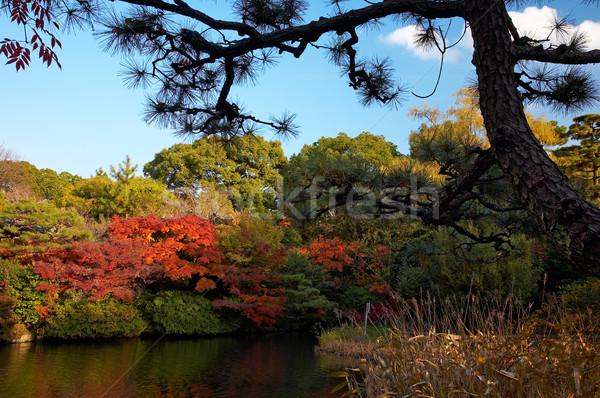 пейзаж лет Японский пруд деревья Сток-фото © zastavkin
