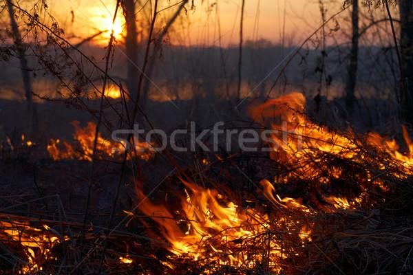 森林火災 火災 森林 ツリー 木材 夏 ストックフォト © zastavkin