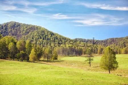 Mezők nyár tájkép dombok fa kék Stock fotó © zastavkin
