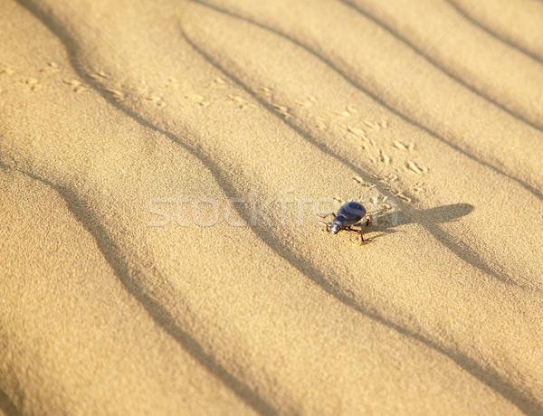 Zand kever woestijn textuur natuur achtergrond Stockfoto © zastavkin