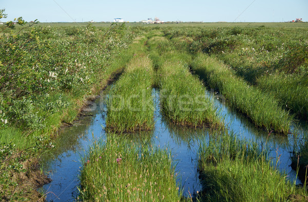 Disturbed by transport tundra landscape in the north of Yakutia Stock photo © zastavkin