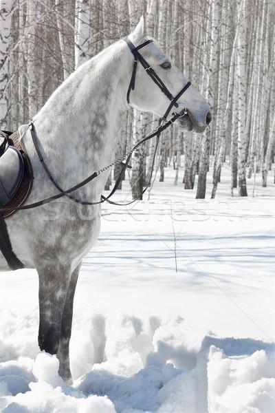 Paard winter bos outdoor shot bleek Stockfoto © zastavkin