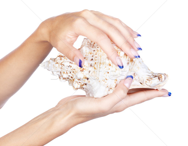 hands with shell Stock photo © zastavkin