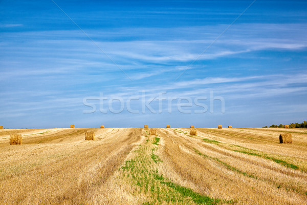 Steppe Altai landscape Stock photo © zastavkin