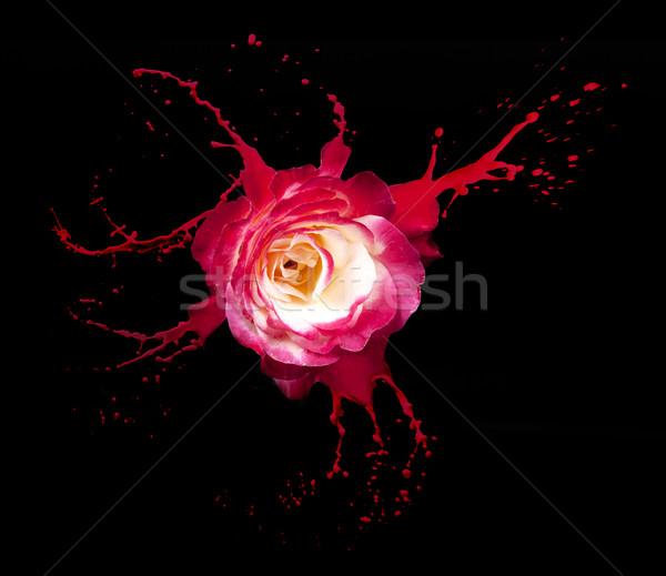 Stock fotó: Piros · rózsa · csobbanások · piros · fekete · rózsa · természet