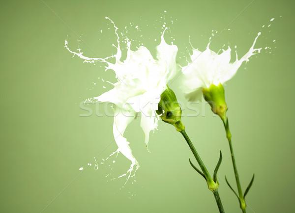 Beyaz sıçrama çiçekler beyaz çiçekler süt yeşil Stok fotoğraf © zdenkam