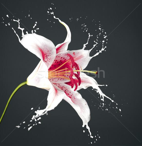 pink flower with splashes Stock photo © zdenkam