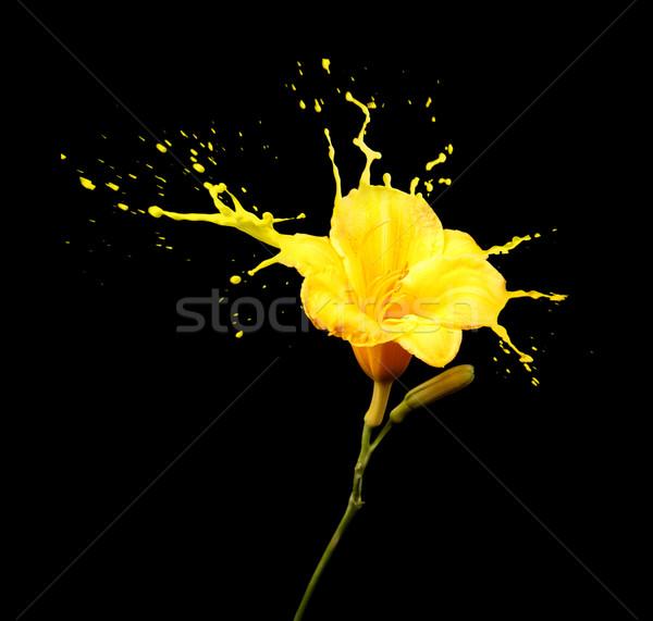 Sárga virág csobbanások fényes virág citromsárga fekete Stock fotó © zdenkam