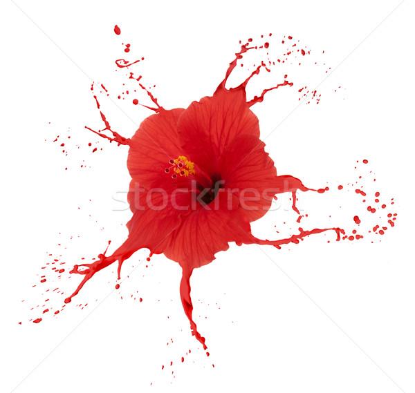 красный гибискуса краской цветок Сток-фото © zdenkam
