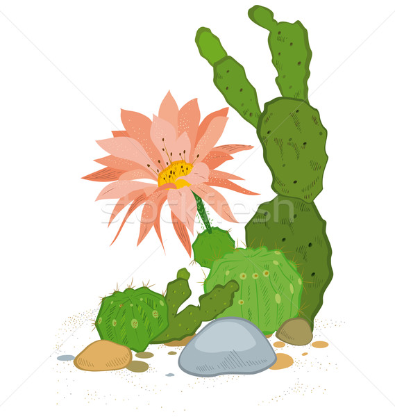 Hand drawn cactus blooms Stock photo © Zebra-Finch