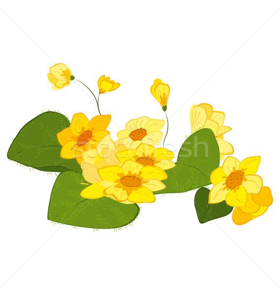 żółty ilustracja kwiaty odizolowany biały Zdjęcia stock © Zebra-Finch