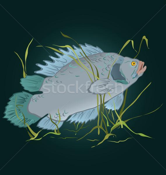 Fish in seaweed  vector Stock photo © Zebra-Finch