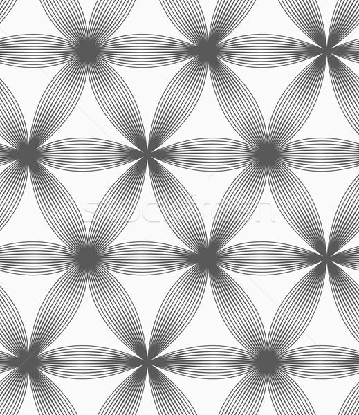 Monochrome linear striped six pedal flowers Stock photo © Zebra-Finch