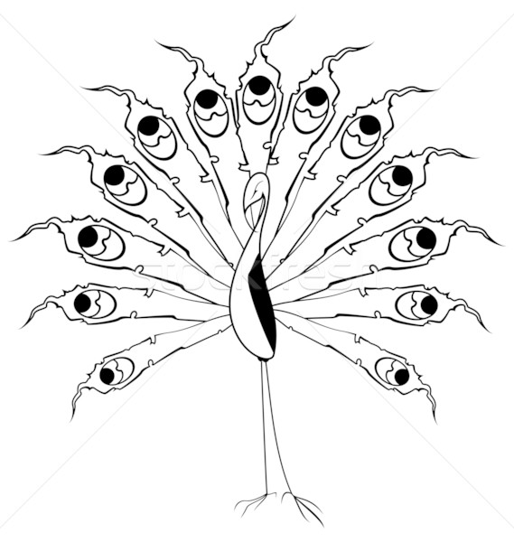 Blanc noir paon vecteur contour isolé blanche Photo stock © Zebra-Finch