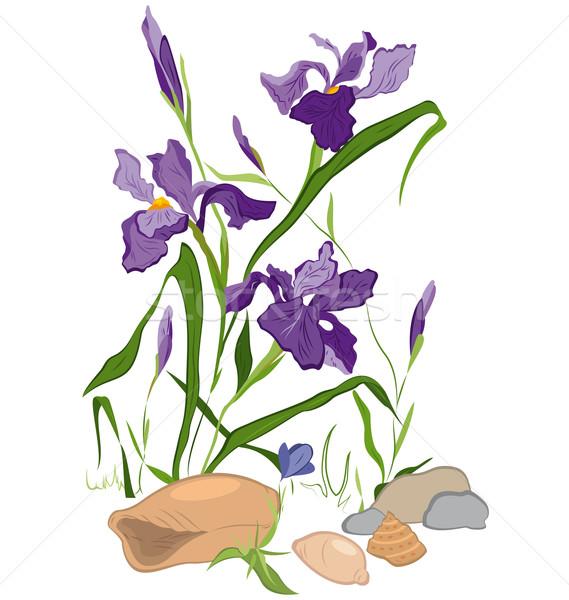 Dibujado a mano iris ilustración flores aislado blanco Foto stock © Zebra-Finch