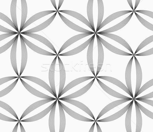 Monochrome slim gray striped six pedal flowers Stock photo © Zebra-Finch