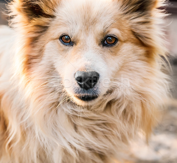 Portrait of a beautiful dog  Stock photo © zeffss