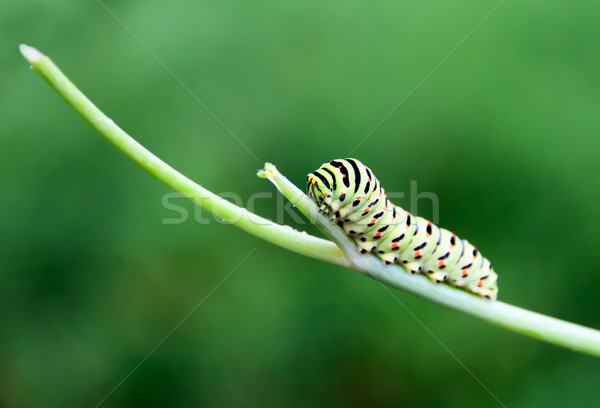 Caterpillar branche printemps papillon jardin beauté Photo stock © zeffss
