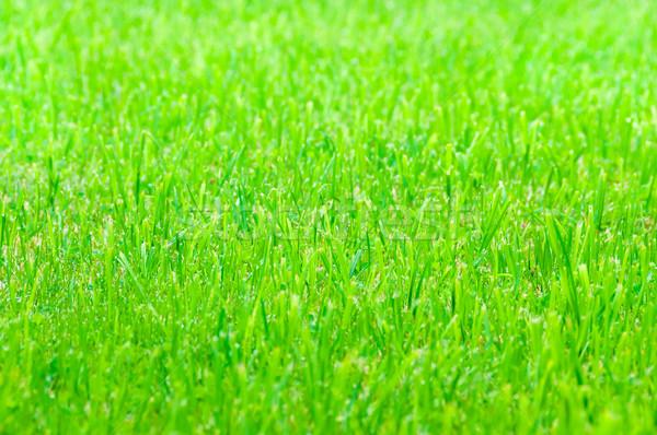 ストックフォト: 緑の草 · テクスチャ · 自然 · 春 · 草 · 抽象的な