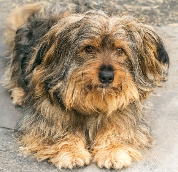 Portrait of a beautiful dog  Stock photo © zeffss