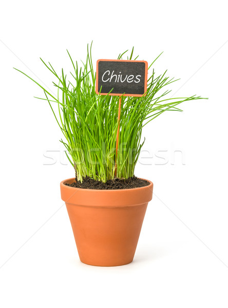 Chives in a clay pot with a wooden label Stock photo © Zerbor