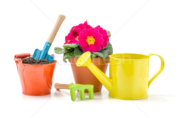 Colorful garden tools and a Primrose on a white background Stock photo © Zerbor
