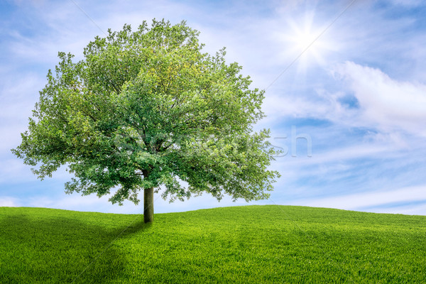 Old oak tree on a green meadow Stock photo © Zerbor