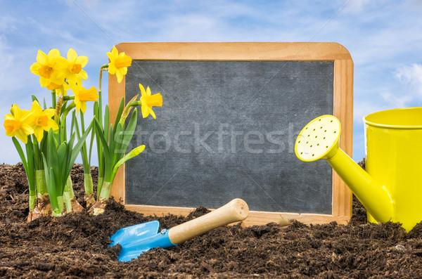 空っぽ 黒板 花壇 花 花 庭園 ストックフォト © Zerbor