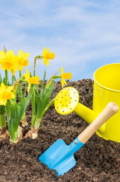 Stockfoto: Narcissen · tuin · tools · blauwe · hemel · hemel · bloem
