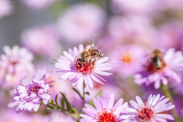 Abeille abeille miel floue printemps Photo stock © Zhukow