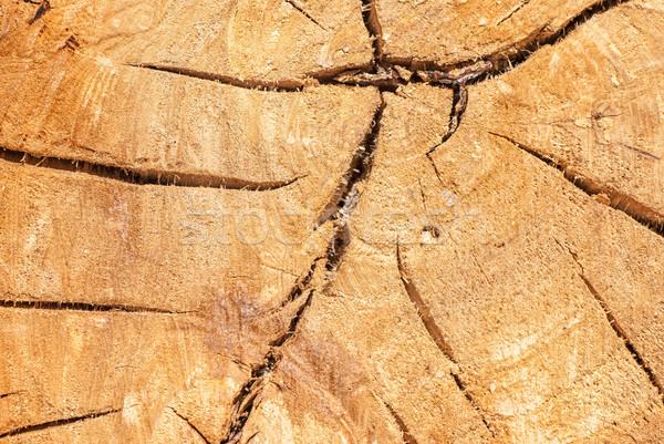 árvore textura rachaduras floresta abstrato natureza Foto stock © Zhukow