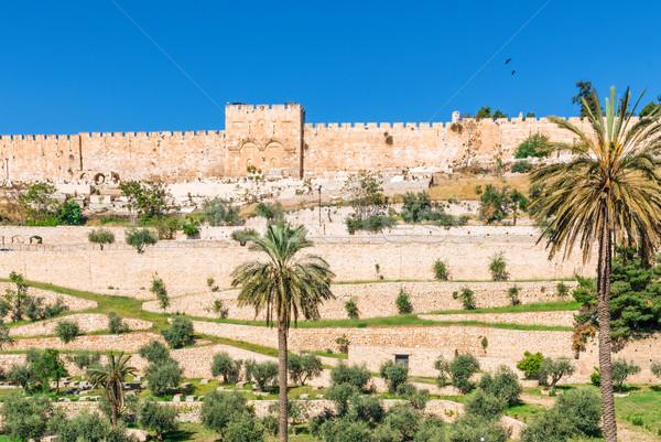 エルサレム 壁 旧市街 ツリー 建物 ストックフォト © Zhukow