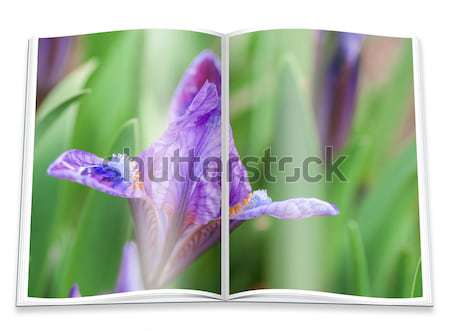 Opened  book with a picture  lilac violet orchid Stock photo © Zhukow