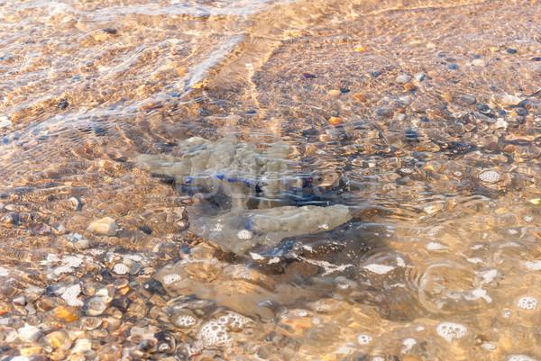 Stock fotó: Nagy · meduza · tengerpart · víz · terv · háttér
