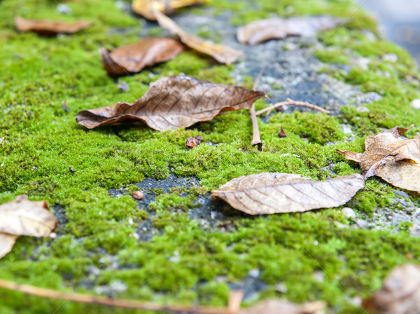 Zdjęcia stock: Jesienią · liści · zielone · mech · drzewo · trawy
