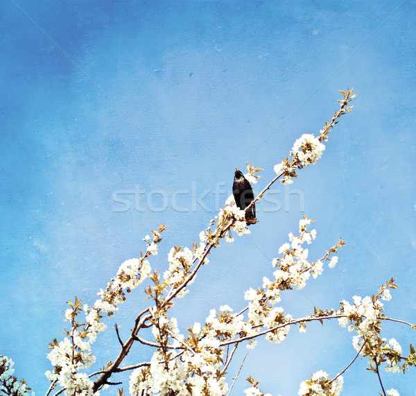 Oud papier klein vogel drogen papier Stockfoto © Zhukow