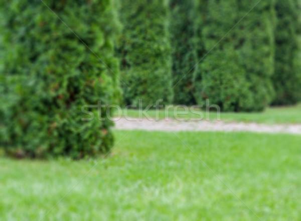 Green garden defocused abstract background Stock photo © Zhukow