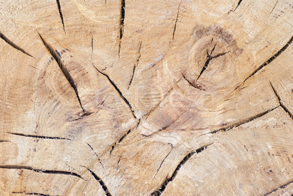 Tree trunk texture or background Stock photo © Zhukow