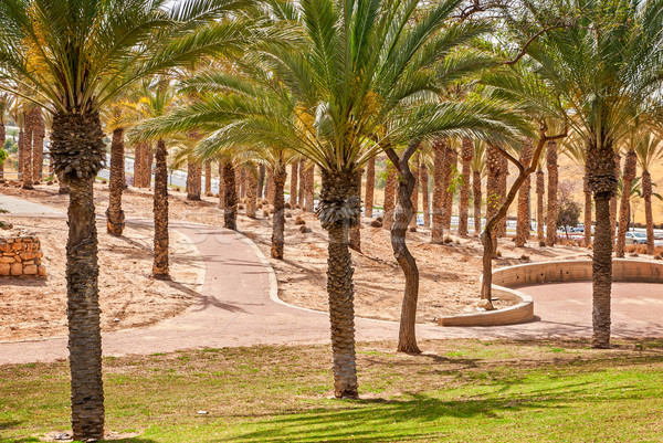 Walkway in a beautiful park with palms Stock photo © Zhukow