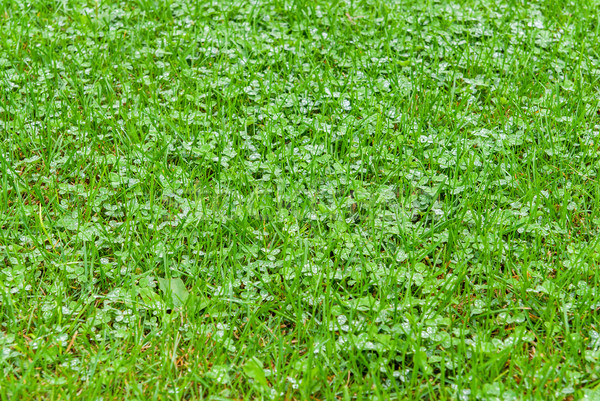 Bright green grass with raindrops Stock photo © Zhukow