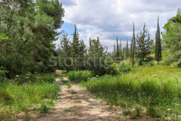 Empty hiking trail in the pine tree and cypress woods Stock photo © Zhukow