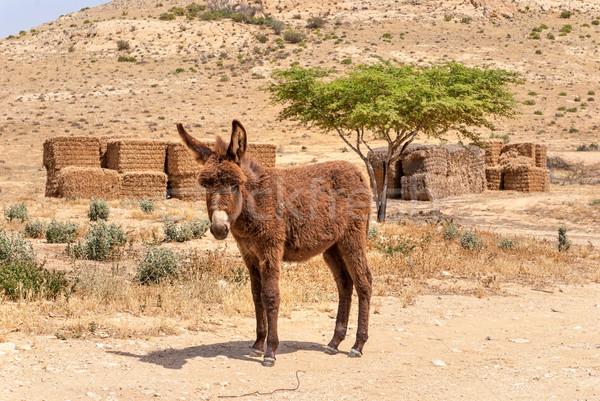 Sivatag tájkép szamár nyár kő állat Stock fotó © Zhukow